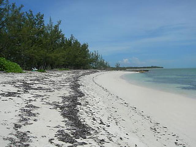土地,用地 为 销售 在 Beach Front Andros, Davis Creek Other Andros, 安德罗斯 巴哈马