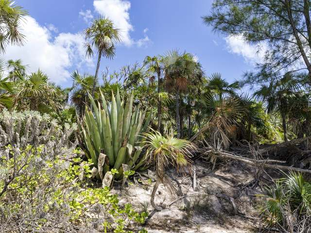 Commercial for Sale at Beach Front, Grape Point North Cat Island Arthurs Town, Cat Island Bahamas